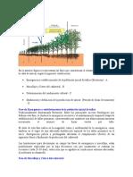 TRABAJO DE GIRAGRO.docx