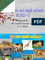 Animals & Babies