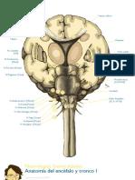 Atlas Neurologia Mir