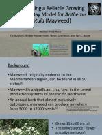 final mayweed presentation