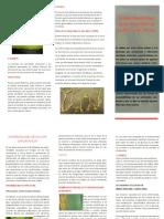 Broshure Arroz PDF