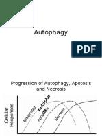 Autophagy mechanism