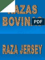 RAZAS BOVINAS