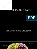 The Human Brain and How It Works