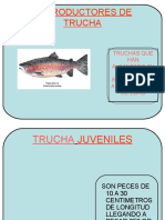 Reproductores de Trucha