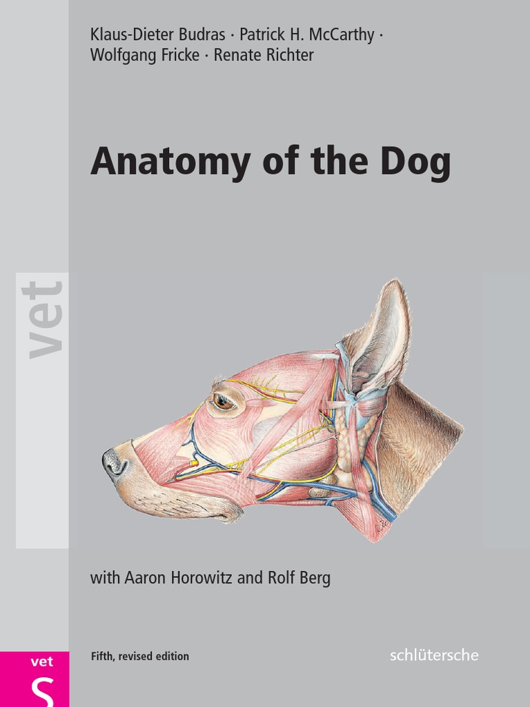 Anatomy of the Dog | Anatomical Terms Of Location | Arm