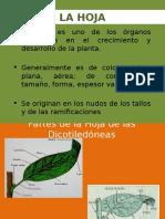 Botánica, Hoja 2014-II