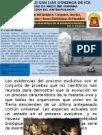 2.-EVOLUTION.pptx