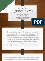 PLANTAS MEDICINALES MAYAS