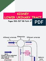The Goljan Kidney Powerpoints