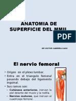 Anatomia de Superficie Del Mmii