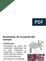 digestivo-embrio