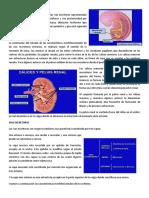 Conferencia 9.pdf