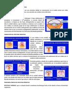 Conferencia 10.pdf