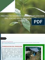 Proyecto Siembra y Comercializacion Del Cacao