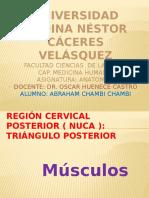 Musculos Cuello e Imagenesssss