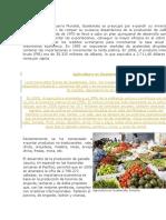 agricultura guatelteca