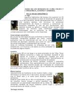 Fauna en Bosques de Clima Cálido y Frío de Selva Amazónica, Estepas y Sabanas