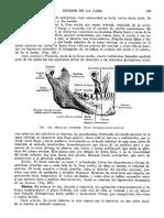 Tratado de Anatomia Humana Quiroz Tomo I_119