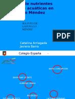 Filtro Biologico Planta Acuatica PRACTICAR