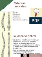vrtebrascervicales1-140308175715-phpapp02