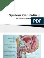 System Genitalia ♂