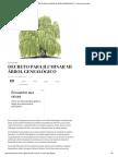 Decreto Para Iluminar Mi Árbol Genealógico - Evolución Consciente