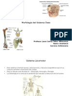 Morfologia Del Sistema Oseo