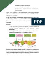 Tema 5. Fosforilación Oxidativa y Cadena Respiratoria.