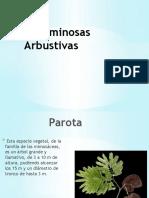 Leguminosas arbustivas