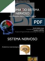 Anatomia Macro e Micro Do Sn PDF