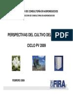 Análisis Del Cultivo de Algodón PV Feb-2009