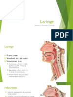 exposición laringe