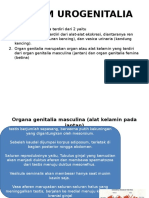 Sistem Urogenitalia Ppt