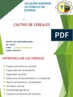 Cereales Trigo.pptx
