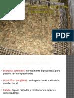 13-fisiologia-digestiva-en-moluscos.pptx