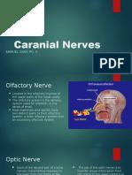 caranial nerves