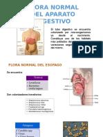 Flora Normal Del Aparato Digestivo