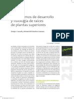 Mecanismos de desarrollo y fisiología de raíces de plantas superiores