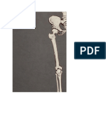 Muscles of the Upper Leg