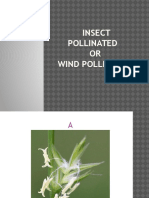 insect  pollinated or wind pollinated