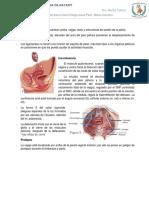 Incontinencia y Prolapso