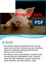 Brucella Suis.pptx