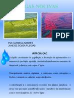Algas Nocivas
