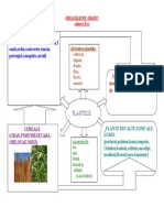 Plante Organizator Grafic
