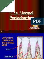 1.the Normal Periodontium