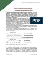 Papel de Los Ácidos Grasos Omega-3 Para Contrarrestar La Inflamación
