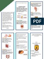 TRIPTICO Sistema Digestivo