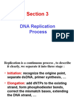 3 DNA Replication End
