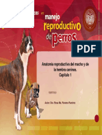 Reproduccion  en Perros